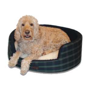 Buddy Dog Bed